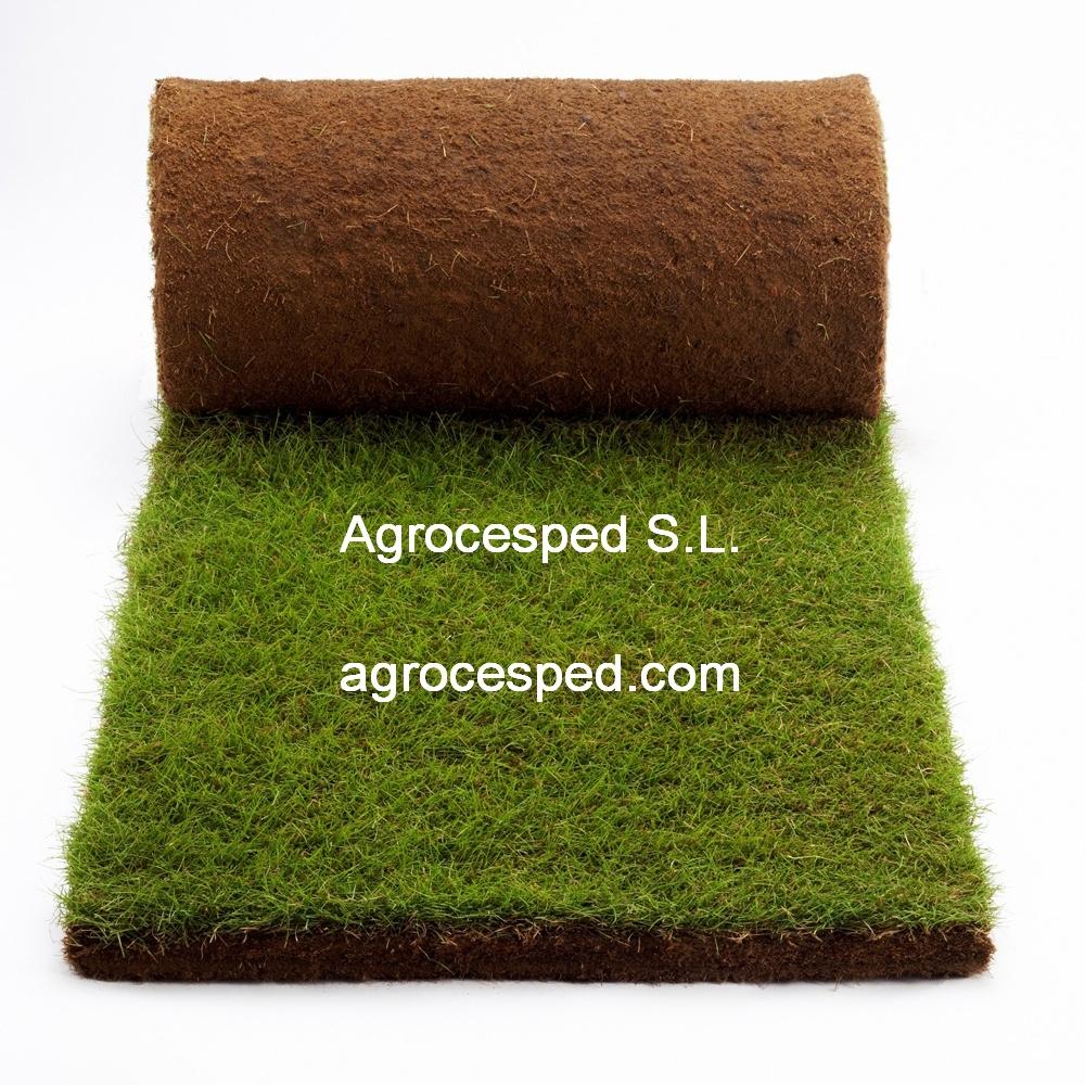 C sped natural 60 m2 tienda agrocesped for Como plantar cesped natural