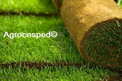 C sped natural 60 m2 tienda agrocesped for Cesped en rollo
