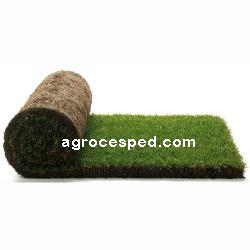 Rollo de césped natural Agrocesped.